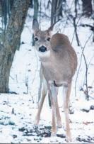 02_5_deer.jpg